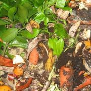 How to Make a Homemade Compost Accelerator | eHow