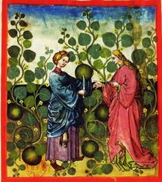 Tacuinum Sanitatis, ca. 1400 Citron Watermellons (definitely purple under that blue gown)