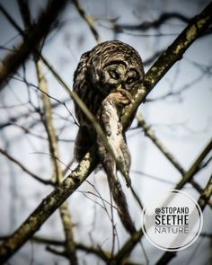 """194 Likes, 22 Comments - 👆Hayden Rossignol (@stopandseethenature) on Instagram: """"Barred owl... We were trying to have a photography adventure day but we got rained out of our first…"""""""