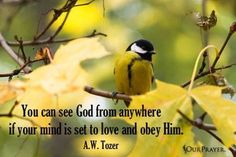 You can see God from anywhere if your mind is set to love and obey him. A W Tozer, Tim Keller, Lloyd Jones, Reformed Theology, Love The Lord, Words Of Encouragement, True Love, Jesus Christ, Bible Verses