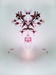 Kaleidoscopic cherry / photo & digital Roberta Cleopazzo