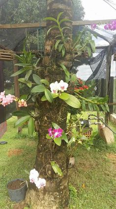 How To Keep Orchids Alive And Looking Gorgeous Orchid Plant Care, Phalaenopsis Orchid Care, Dendrobium Orchids, Orchid Plants, Rare Flowers, Exotic Flowers, Beautiful Flowers, Orchids Garden, Garden Trees