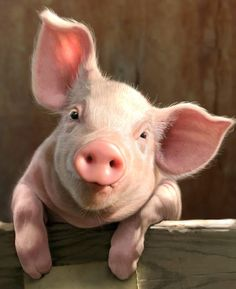 Cute Baby Pigs, Cute Piglets, Cute Baby Animals, Animals And Pets, Funny Animals, Baby Piglets, Pig Drawing, Drawing Ideas, Funny Pigs