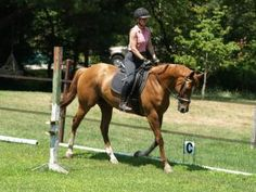 Diane is an adoptable Thoroughbred Horse in Methuen, MA. Diane is a lovely, 10-year-old Thoroughbred mare, about 15.2 hands. She is a sensitive horse, but smart, learns quickly and seems to really enj...