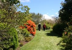 This horticultural oasis was created by a passionate plantsman and the passion is contagious. The Province, Oasis, New Zealand, Golf Courses, Country Roads, Gardens, Passion, Park, Places