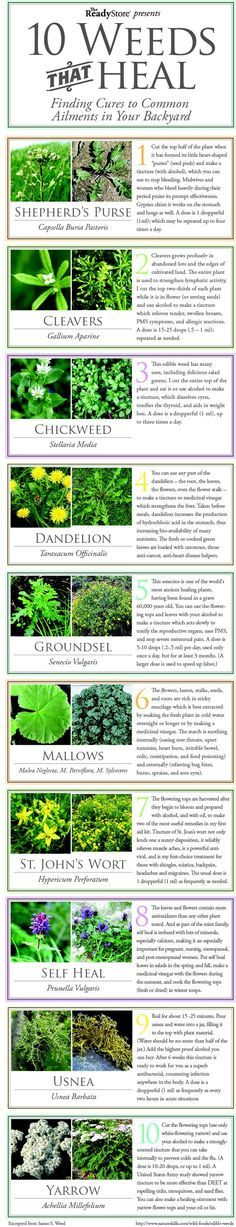 Who knew weeds were good for something? | Check out these 10 weeds and their healing properties #SurvivalLife http://www.SurvivalLife.com