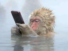 Fotógrafo de vida silvestre del año 2014 (© Marsel van Oosten)