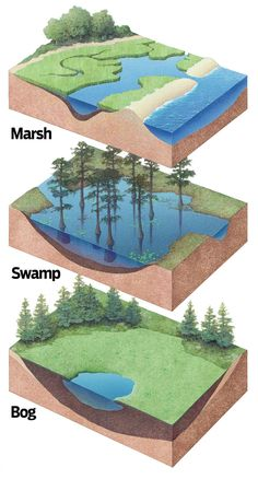 Marshes, Swamps, and Bogs Earth Science Lessons, Earth And Space Science, Science And Nature, Landscape Architecture, Landscape Design, Physical Geography, 3d Modelle, Biomes, Environmental Science