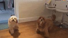 Arrgh! Gerrof me you clumsy lummock!!! https://plus.google.com/115485979219209097599/posts/NjPs762Md2u