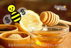 apicultura-online-money-bee