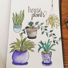 Daily drawing challenge day 24: House Plants  @creativebug #creativebug #CBDrawADay #sketchbook #draweveryday by lovenotesbysephra