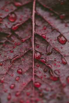 Blood red leaves © Kelly Smith Photography