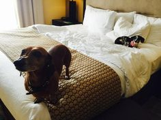 Most La Quinta's don't have pet fees or weight limits. Book with BringFido.com & you'll know the pet policy with 100% accuracy AND get ratings from other dog-loving travelers!
