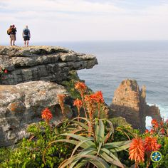 Pondo-Explorer – Self-catered Hiking Trail with tented camps, Pondoland Wild Coast Marine Traffic, Holiday Accommodation, Nature Reserve, Tent Camping, Hiking Trails, Backpacking, Coastal, Africa, Explore