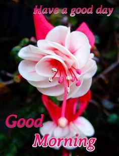 Good Morning Love You, Good Morning Wishes Friends, Good Morning Flowers Pictures, Good Morning Sunday Images, Good Morning Beautiful Pictures, Good Morning Roses, Good Morning Cards, Good Morning Greetings, Morning Post