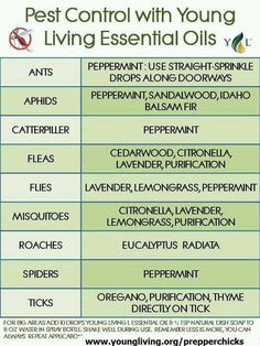 Pest Control with Young Living Essential Oils