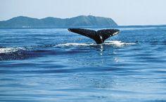 International Court of Justice upholds Australia's bid to ban Japanese whaling in Antarctica Eden Nsw, Byron Bay Accommodation, International Court Of Justice, Whale Watching Season, Land Of Oz, Student Travel, Sunshine Coast, Antarctica, Marine Life