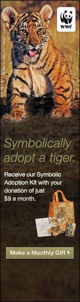 #wwf #tiger #adoption