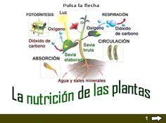 Actividad para estudiar y practicar el tema de las plantas