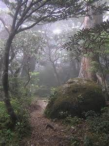 yakushima island japan - Bing images