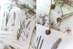 botanicals for special cards, tags, displays