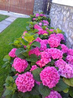 Real Flowers, Pink Flowers, Beautiful Flowers, Side Yard Landscaping, Tree Lined Driveway, Small Garden Design, Garden Boxes, Garden Projects, Hydrangea