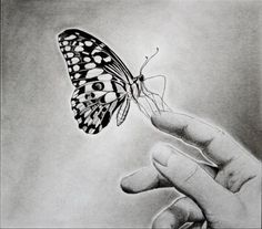 10 Beautiful Butterfly Drawings for Inspiration