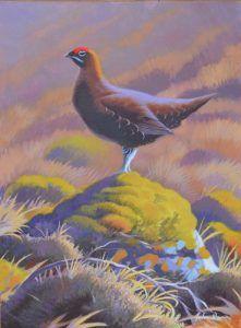 John Davis www.JohnDavisArtist.co.uk   Grouse – Oil on board framed Size – 12″ x 16″