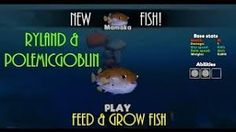 Image result for  fish feed and grow