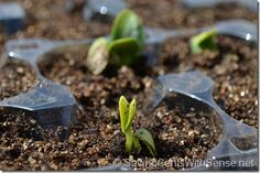 Planting Seeds in Repurposed Egg Carton -  - savingcentswithsense.net -