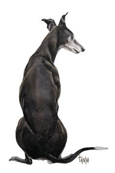 Me & My Shadow, Greyhound Galgo Windhond Whippet Dog Art print  hondenportret dierenkunst afmeting 21x30cm door TanjaOnTheWall op Etsy