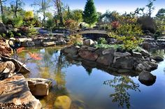 Koi Pond at The Creation Museum