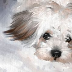 Maltese Dog Pet Portrait Original Art Painting Canvas Giclee Print Medium | eBay