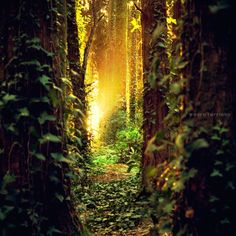 He grows green in the sun, And his branches spread out in his garden.  Job 8:16