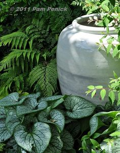 A white pot is a natural choice to brighten a shade garden, especially if you plant a white-variegated plant in front of it