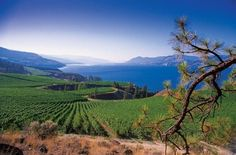 Kelowna, British Columbia on Lake Okanogan - absolutely gorgeous!!!