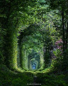 """""""The Tunnel of Love"""" located near the village of Klevan in Rivne region is a botanical phenomenon. It is definitely one of the most picturesque places in Ukraine"""