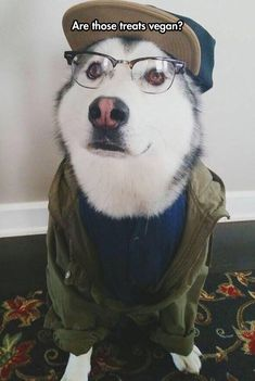 Hipster life is ruff.