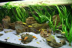 Fish Tanks Aquascaping | Malawi Lake by Oliver Knott | Blue Aquarium