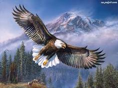 Znalezione obrazy dla zapytania ptaki orły zdjęcia fotografie