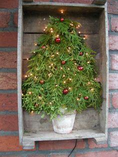 http://www.geelpunt.be/FotosKVLVBloemschikkenKerst2008/DSCN3729.JPG