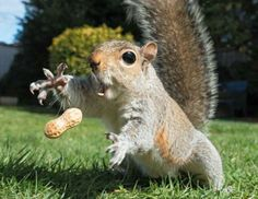 Squirrel: Catch!!!