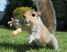 Squirrel: Catch!!!