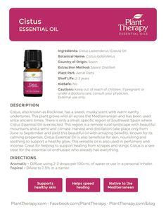 November Oil of the Month: Lavender Diva & Cistus - Naturally Blended Are Essential Oils Safe, Essential Oil Uses, Young Living Essential Oils, Plant Therapy, Doterra Essential Oils, Diffuser Blends, Massage Oil, Wound Care, Living Essentials