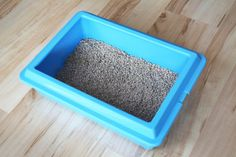 One aspect of rabbit care is setting up a litter box for rabbits and later, training a rabbit how to use it.