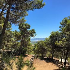 Today's view from the office high in the pine trees looking down on the Girona coastline. #costabrava #spaininstyle #LuxuryTravel #LoveSpain #officeview #seaview #getaway #instatravel #TravelTuesday #privatetravel #pinetrees #beach #backtonature #viewstodiefor