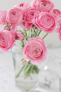 themagicfarawayttree:Pink Flowers at Home by Paris in Four Months on Flickr