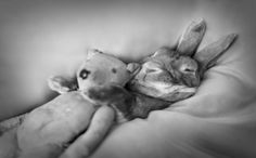 www.rachaelmckenna.com   portfolio ~ sleeping rabbit