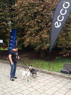 Dorota Wellman, z psami ekipy Stendi