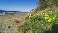Lorne  #coastal #nature #seaside #australia #lorne #blueskys #flowers #autumn by harry.batstone http://ift.tt/1IIGiLS